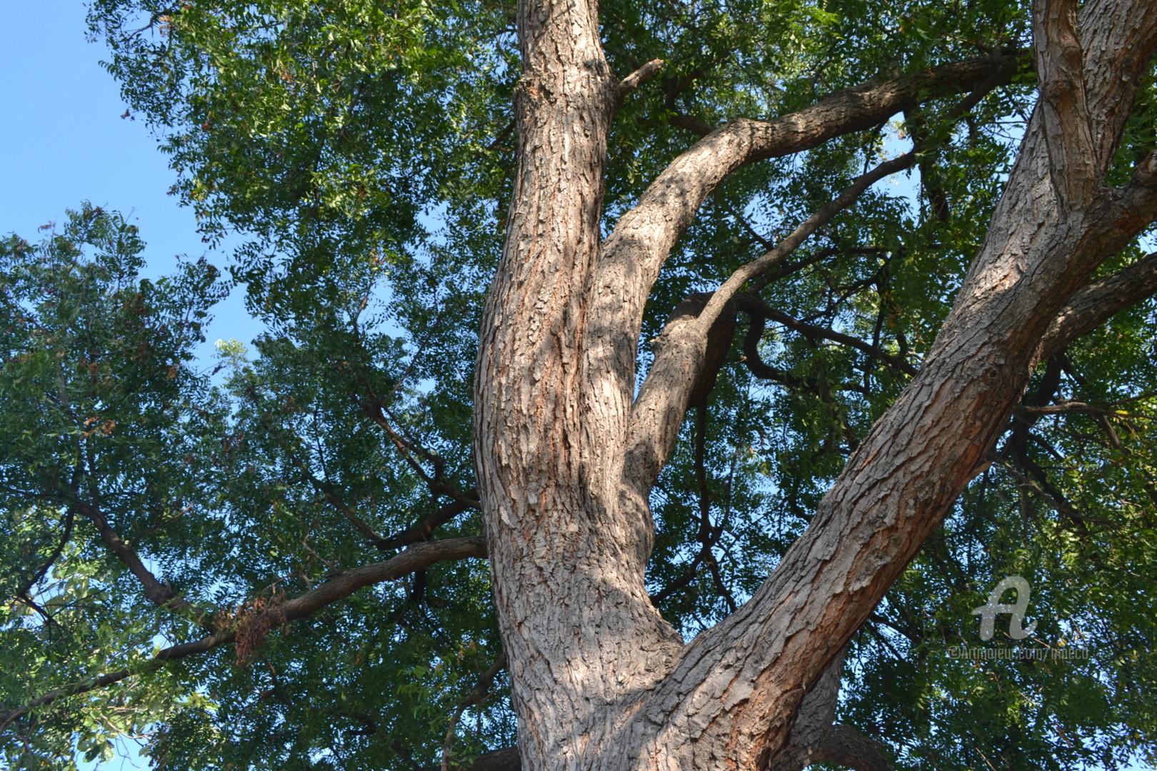 Mariska Ma Veepilaikaliyamma - Beloved Neem Tree Mother