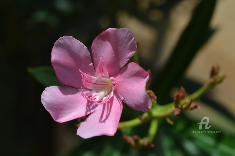 Mariska Ma Veepilaikaliyamma - oleander