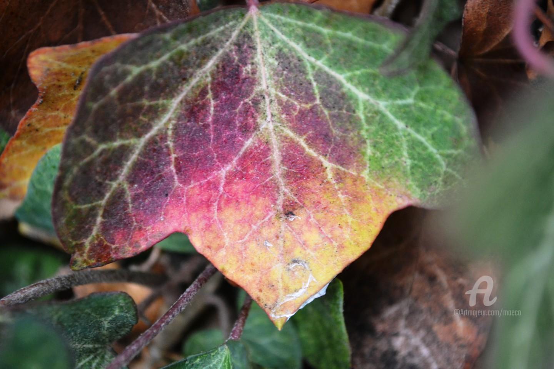 MAriska MA Veepilaikaliyamma - feuille d'automne II