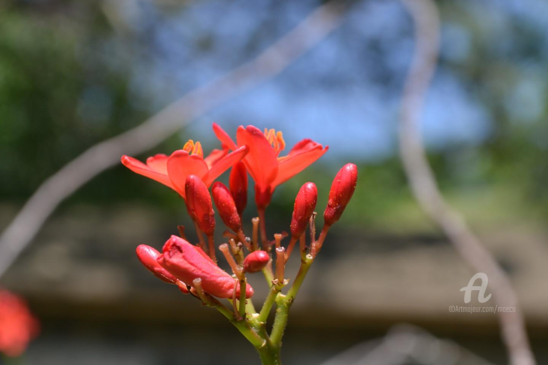 Mariska Ma Veepilaikaliyamma - Red flower in secret garden
