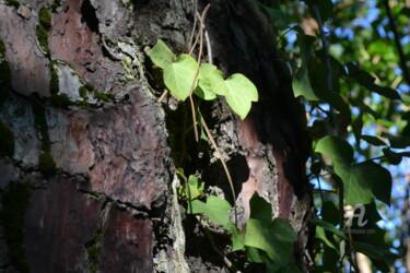Arbre Tree II