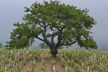 Vigne et arbre Fleurie
