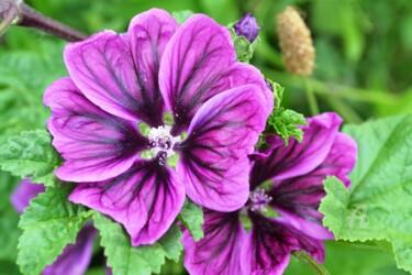 Fleur sauvage Wild flower