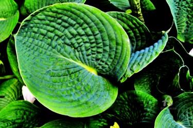 Labyrinthe des plantes  Plant Labyrinth