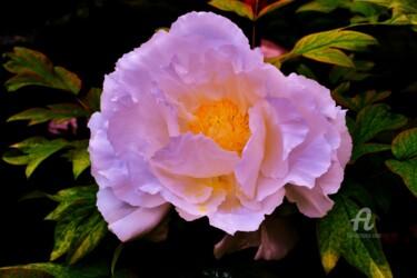 Fleur de la lumière  Flower of Light