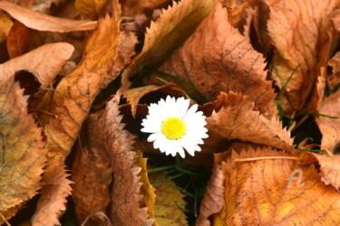Fleur de l'automne - Autumn flower