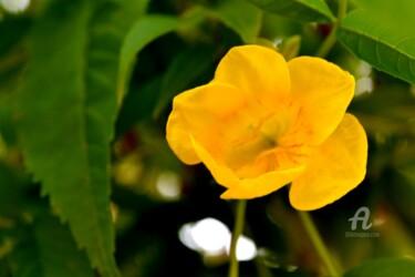 Sarakonrai Flower - Fleur